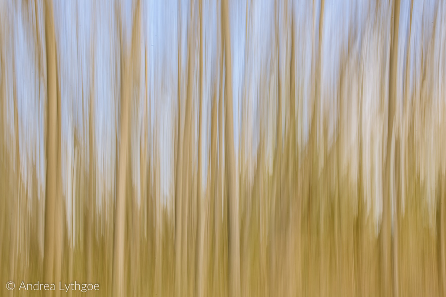 LongExposureDead Trees-1